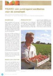 FIGARO: een junidragend aardbeiras - Fragaria Holland