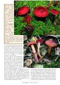 Von Scharlach, Läusen und Aphrodite - Tintling - Seite 6