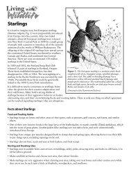 Starlings - Washington Department of Fish & Wildlife
