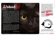 Om våra katter kunde tala, skulle vi få höra berättelser som ... - iFokus
