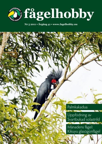 Kikuyu glasögonfågel - IQ Pager