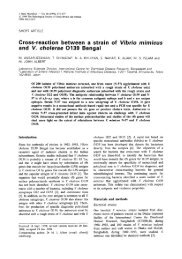 Cross-reaction between a strain of Vibrio mimicus and V. cholerae ...