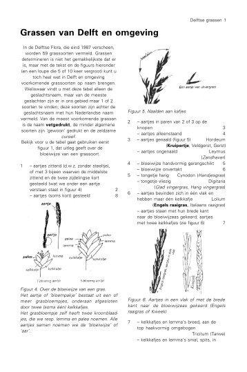 Grassen van Delft en omgeving - Vssd