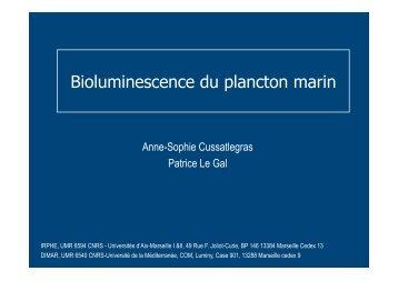 Bioluminescence du plancton marin