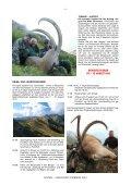 SIBIRISCHER STEINBOCK - Page 4