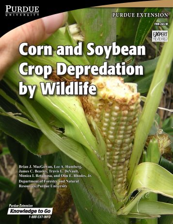 Corn and Soybean Crop Depredation by Wildlife - Purdue Extension ...