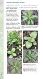 Ay HorseWeed.indd - Purdue Extension - Purdue University - Page 4