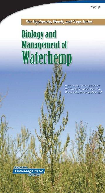 Biology and Management of Waterhemp - Purdue Extension ...