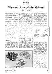Olibanum indicum: indischer Weihrauch - Astral