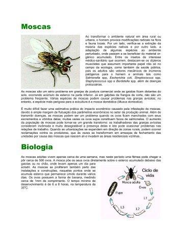 Moscas Biologia