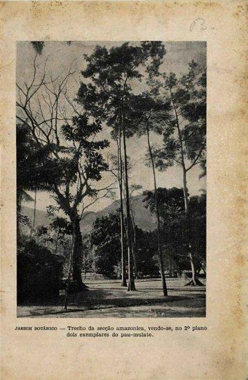 12 - Rodriguésia - Jardim Botânico do Rio de Janeiro