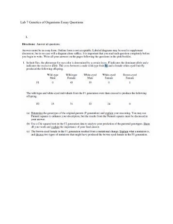 online essay review essaylab com