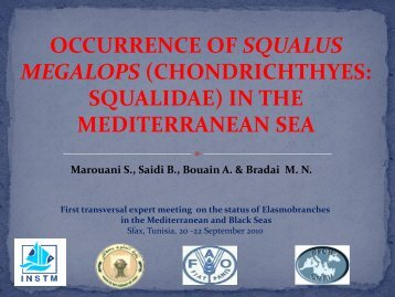 Occurrence of Squalus megalops