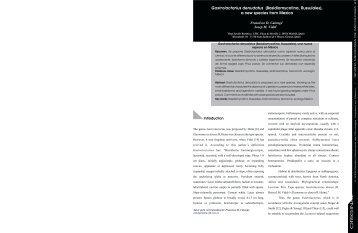 RMM 10 - Revista Mexicana de Micologia