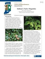 Indiana's Native Magnolias - Purdue Extension - Purdue University