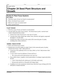 Chapter 24 Seed Plant Structure and Growth Section 1