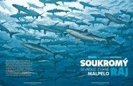 Aktuelle Folge 18 / 2010 einziehen (PDF) - BUDDY Potápění