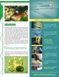 Bulharsko - BUDDY Potápění - Page 4