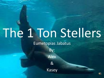 Save the Stellers