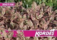 2008 - Kordes-Jungpflanzen