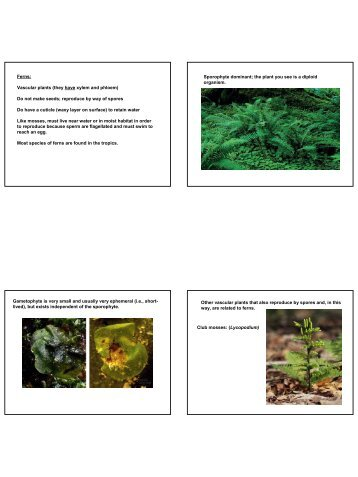 ceratopteris fern growth and analysis essay Growth and analysis of the ceratopteris (c-fern) life cycle: observing fertilization and mature further growth the fern grows and the underside of reproductive.