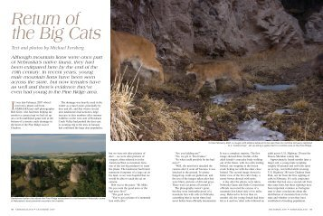 Return of the Big Cats - Nebraska Game and Parks Commission