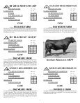 To All Beef Producers - angus beef cattle sales by the southwest ... - Page 3