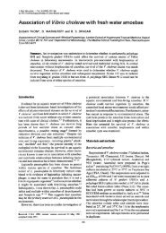 Association of Vibrio cholerae with fresh water amoebae - Journal of ...