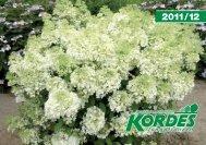 Katalog 2011/12 - Kordes-Jungpflanzen
