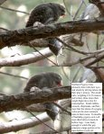 110812 Field Note JC Pygmy Owls Mourning Doves ... - MPG Ranch - Page 3