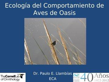 Ecología del Comportamiento de Aves de Oasis - Mendoza CONICET