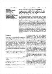 Augmentation of major histocompatibility complex class I ... - OPUS