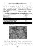 IMUNOPATOMORFOLOGINIAI GALVIJŲ TUBERKULIOZ S POKY IAI ... - Page 4