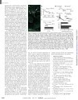 Combined Analog and Action Potential Coding in Hippocampal ... - Page 3