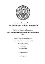 Nucleotide Excision Repair - OPUS - Universität Würzburg
