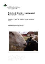 Metoder att förhindra vargangrepp på får i vargtäta områden - SLU