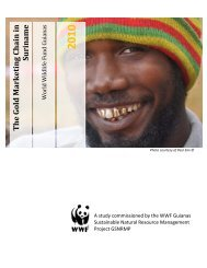 The Gold Marketing Chain in Suriname - WWF, Abu Dhabi unveil ...