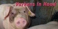 flyer steffie.indd - Stichting Varkens in Nood