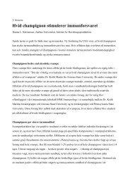 Hvid champignon stimulerer immunforsvaret
