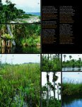 CUBA: Zapata - The Field Museum - Page 3