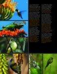 CUBA: Zapata - The Field Museum - Page 7