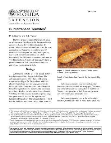 Subterranean termites - Orange County Extension Education Center ...