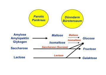 kohlenhydrat und fettblocker