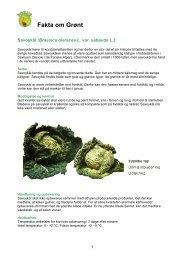 Fakta om Grønt - FoodSam