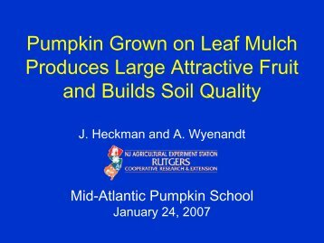 Pumpkin Grown on Leaf Mulch Produces Large Attractive Fruit and ...