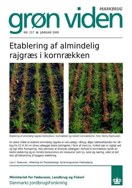 Etablering af almindelig rajgræs i kornrækken - PURE