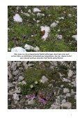 NT vom | 15 - DAV Karlsbad - Seite 7