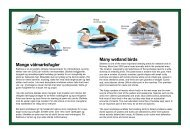 Mange våtmarksfugler Many wetland birds - Home