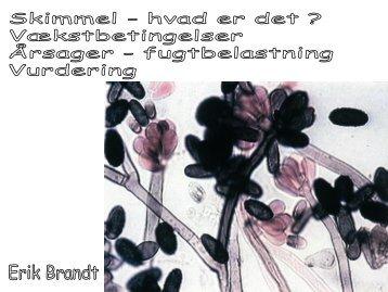 Skimmel Nuuk - VBN