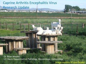 Caprine Arthritis Encephalitis Virus Research Update